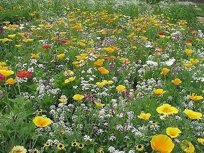 Throw 2 Grow Little Carpet Flower Meadow Seed Mix.  28 annual varieties[50g - 10sqm]