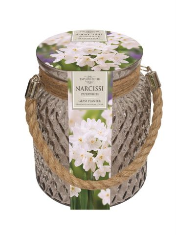 Indoor Paperwhite Glass Narcissi Planter Gift Set