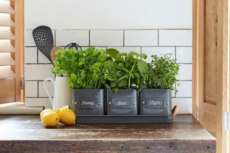 3 Herb Pots in a Leather Handles Tray from Burgon & Ball CHARCOAL colour