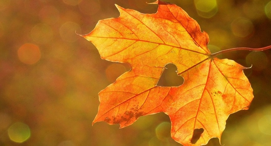 Why you should make the most of an Indian summer