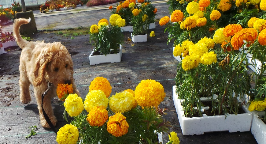 Six non-toxic plants that are safe around children and pets
