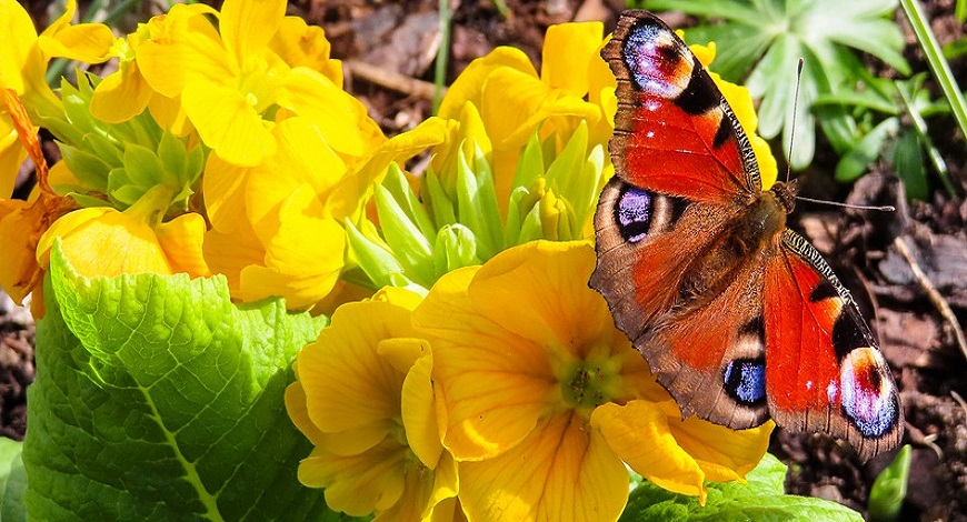 Can you guess which spring flower has been voted the best? It's time to plan your spring garden