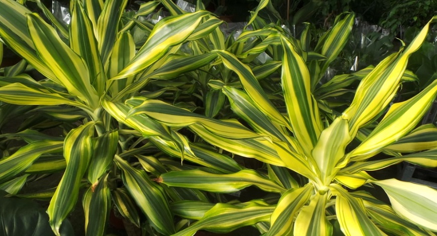 Can plants help in the fight against coronavirus? Air purifying houseplants to aid good heath