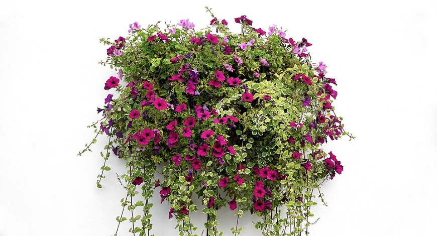 It's time for Hanging Baskets! An easy guide to making something beautiful with flowers