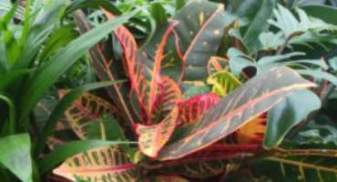 Six tricky house plants and how to prevent them from dying!