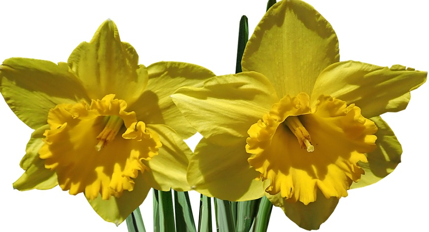 The best bulbs to plant in autumn, here's a recipe for spring flowering success