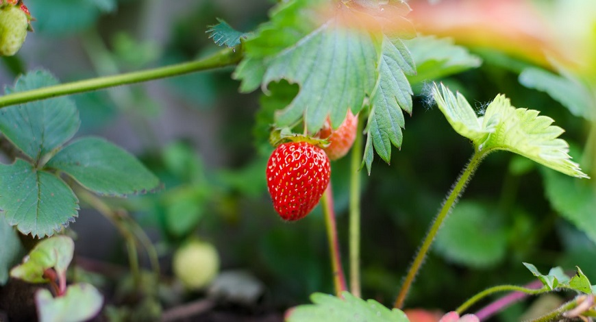 Six easy edibles for the kitchen garden, give growing a go!