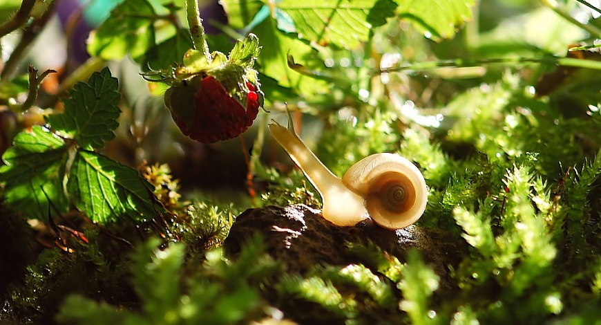 How to protect your garden from slugs and snails and avoid SLUGfest in summer