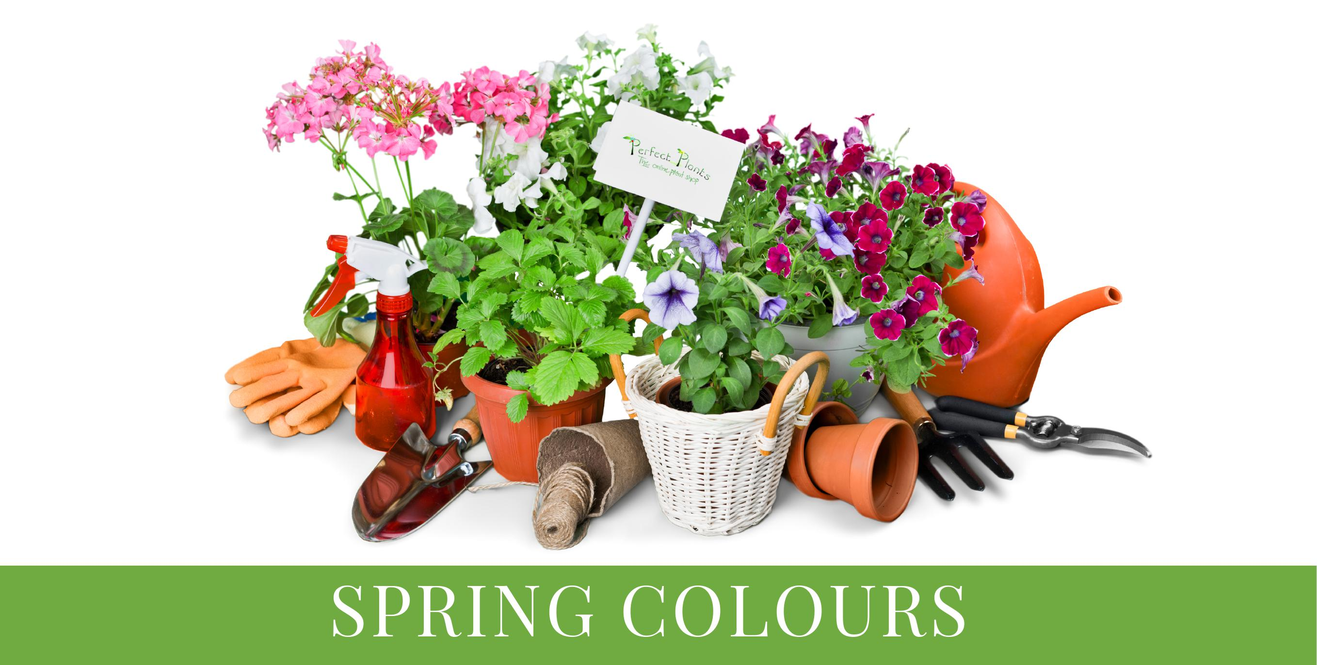 Spring colours Bright and colourful selection of potted flowers and garden tools