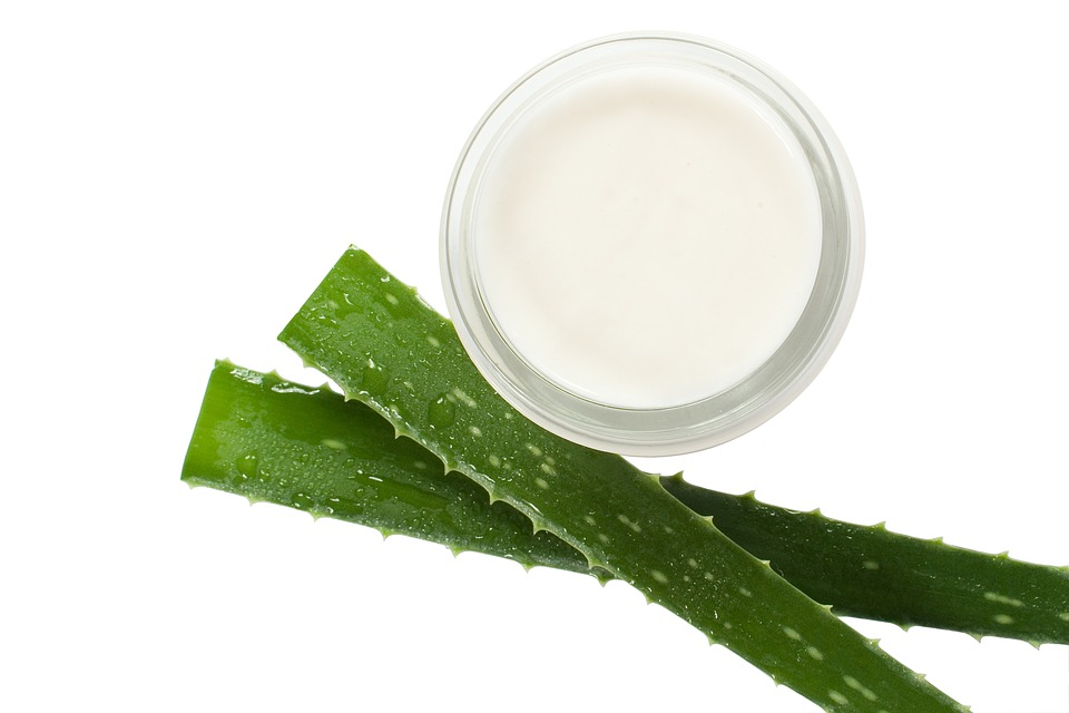 Aloe vera is good for you
