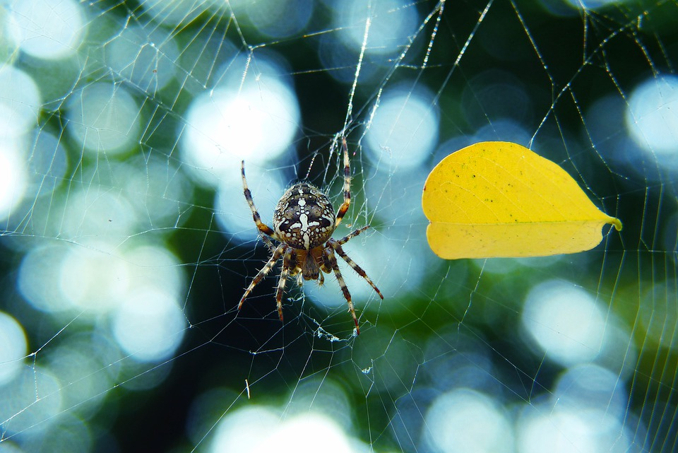 Spider on web in autumn garden