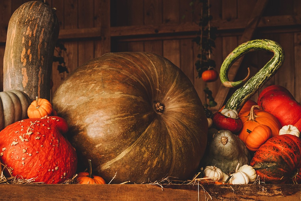 Collection of pumpkins