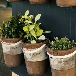 Pots of herbs such as thyme, sage, rosemary and oregano