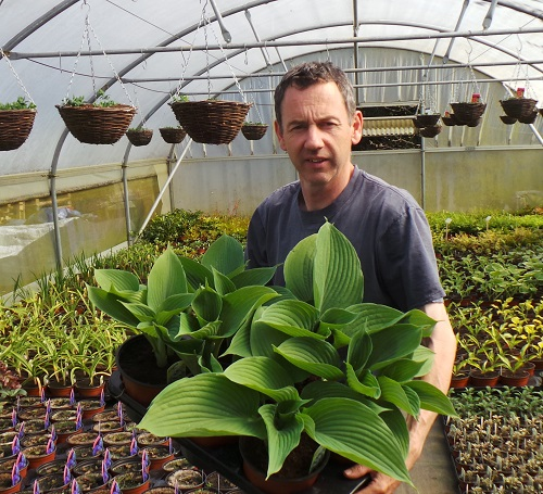 Plant nursery growing hostas, perennials, annuals. Perfect Plants