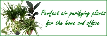 Air purifying house plants banner
