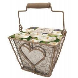 bulb growing kit containing crocus in a metal square container with a heart