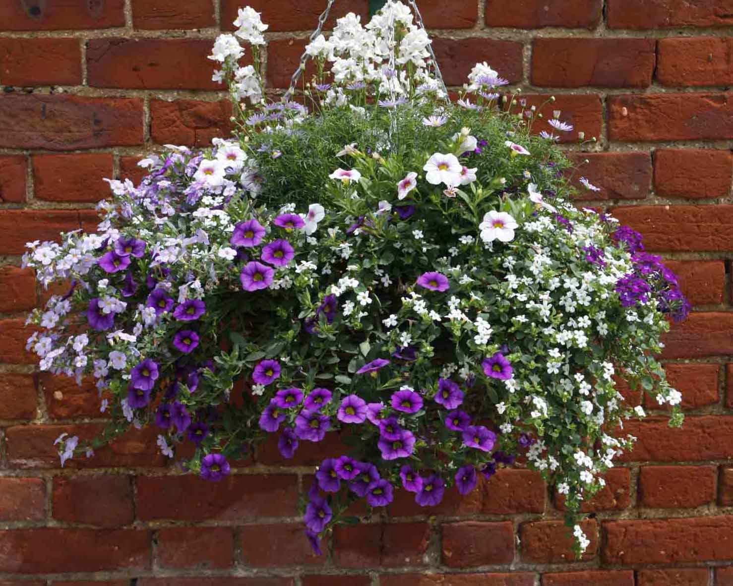 It S Time For Hanging Baskets Perfect Plants