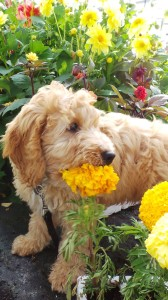 Dog with flowers puppy
