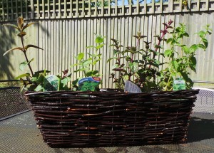 Completed herb basket SMALL