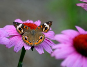 Butterfly on flower in summer garden August
