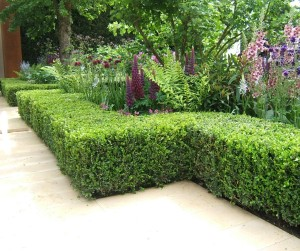 Low hedge provides direction around a garden