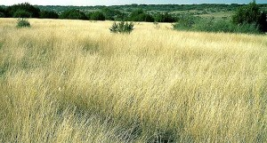 Long grass in the countryside