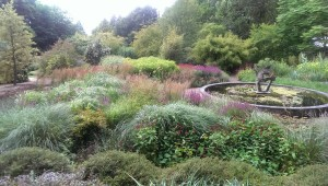Ornamental Grasses in August, September, October gardens