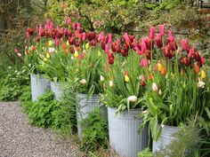 spring flowering bulbs planted in containers