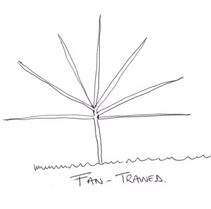 Fan trained tree apple, plum, pear, cherry, almond, nectarine, fruit