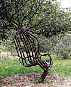 Willow seat made from pruning and training salix