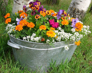 flowers in pots give you colour in the garden all year round
