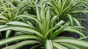 Spider, plant, house, plant, houseplant, filtering, health