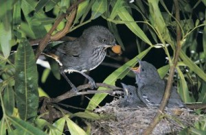 Birds like to nest in hedges