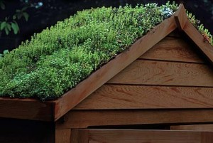 Green roof on shed