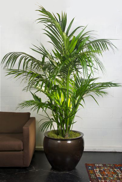10 good reasons to surround yourself with house plants perfect plants - Good indoor plants ...