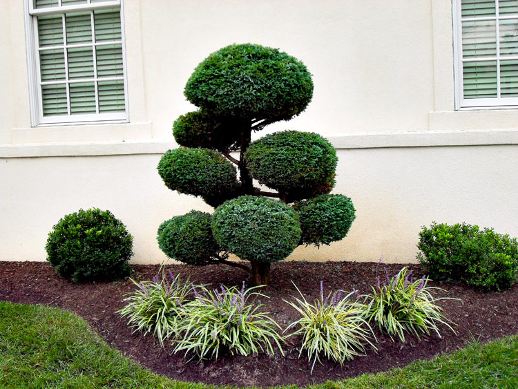 Let 39 s should out for shrubs six reasons to love them for Structural plants for small gardens