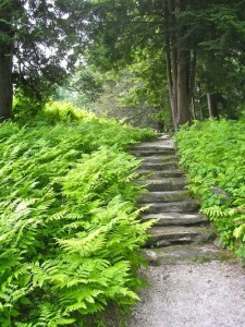 Ferns, mass planting, plants, garden, shade