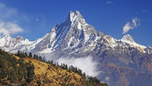 Himalayas, rhododendrons, acid, soil, ericaceous, plants