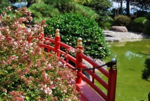 Japanese, gardens, elements, design, planting, bridge