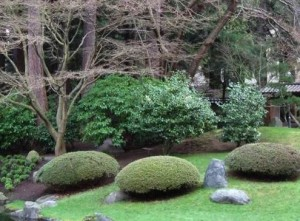 Japanese, garden, odd, clipped, evergreens, mounds, shrubs