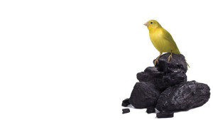 Canary, in coal, mine, chemicals, gas, life, saver, detect