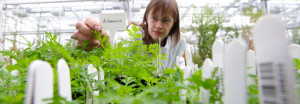 University of York, research, house, plants, gardens, growing