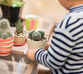 Boy, cactus, cacti, spikes, thorns, plants, care, horticulture, house, plant, houseplant