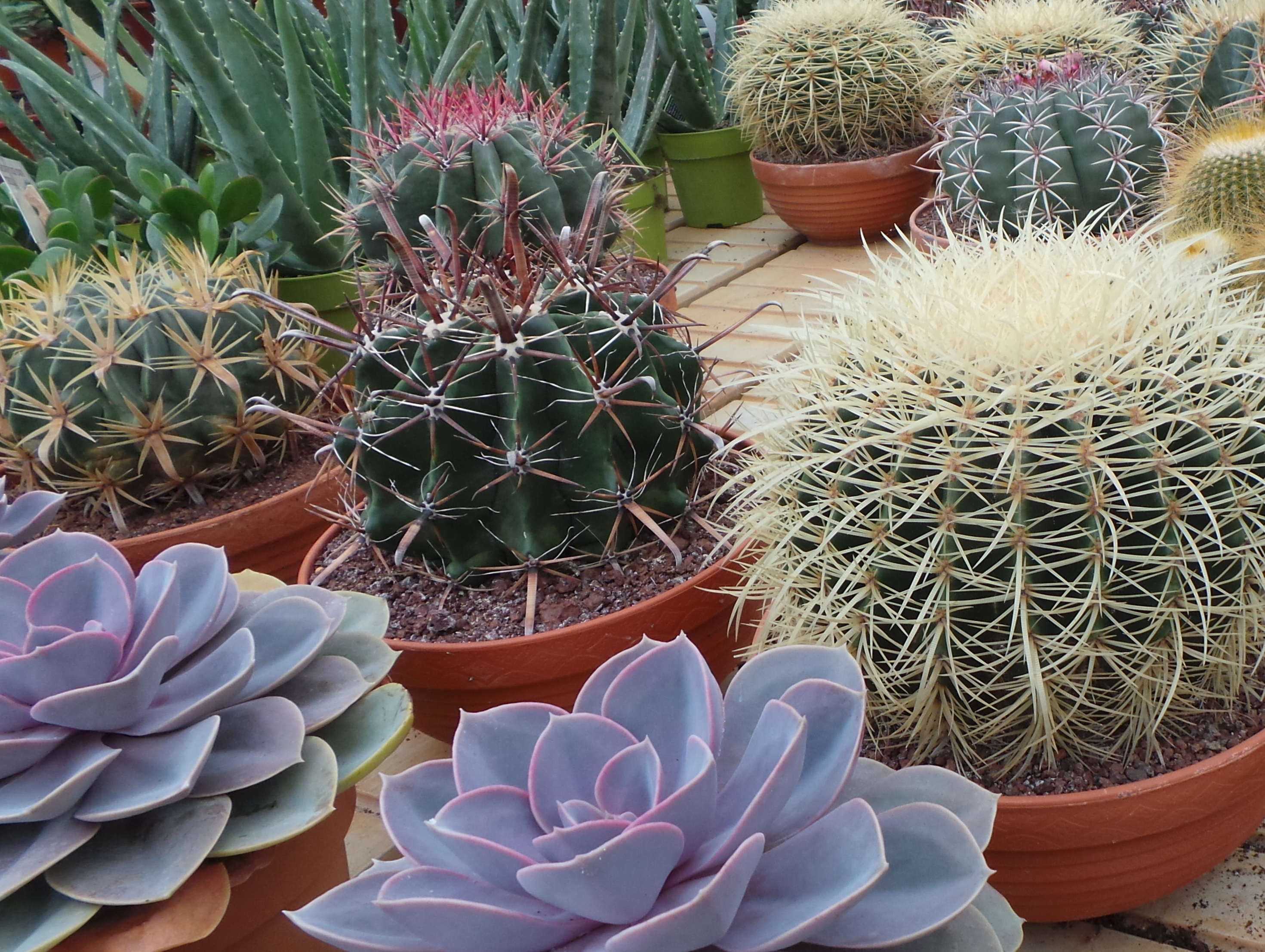 Unusual Plants That Live In The Air And Tortoise