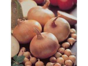 Onion sets, planting, vegetables, growing, garden