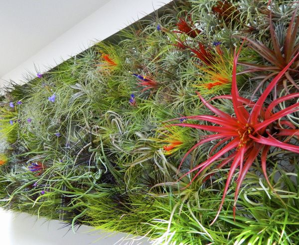 Unusual plants that live in the air and tortoise for Air plant art