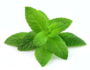 mint, growing, vegetables, herbs, garden, flavour, drinks, salads
