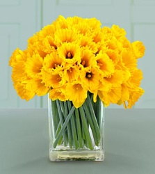 Bunch of daffodils, colour, yellow, happy, uplifting, mood