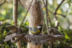 Great tit, bird, garden, feeding, biodiversity, food, insects, aphids
