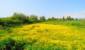Green, yellow, colour, field, meadow, calm, peaceful, happy